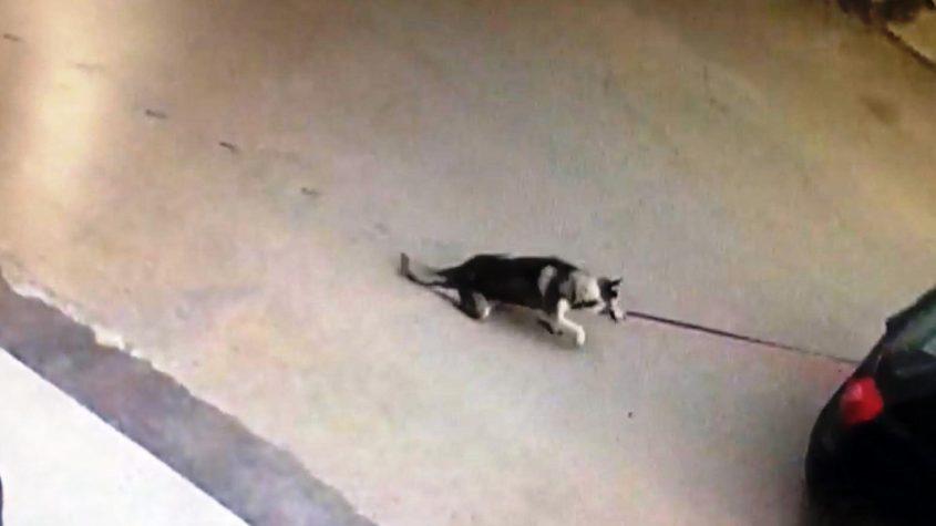 התעללות בכלב שנקשר לרכב ונגרר