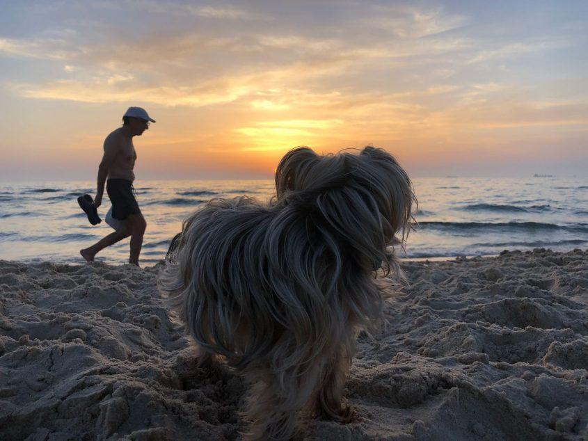 כלב חוף ים בעלי חיים שקיעה. צילום: שמואל דוד