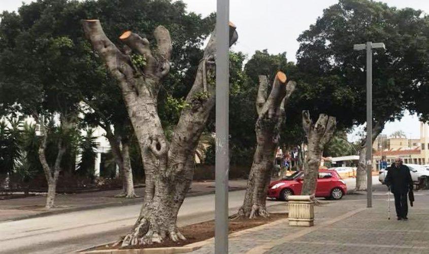 עצים כרותים באשקלון