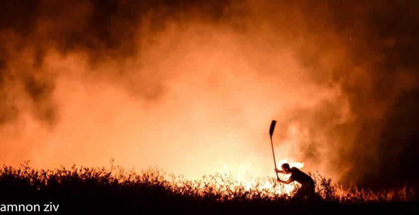 שריפה שריפת חורש יער אש. צילום: אמנון זיו