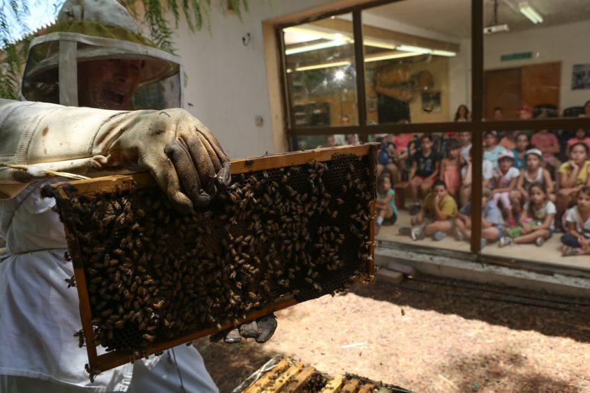 פעילות ילדים בנושא הדבש. צילום: תיירות יד מרדכי