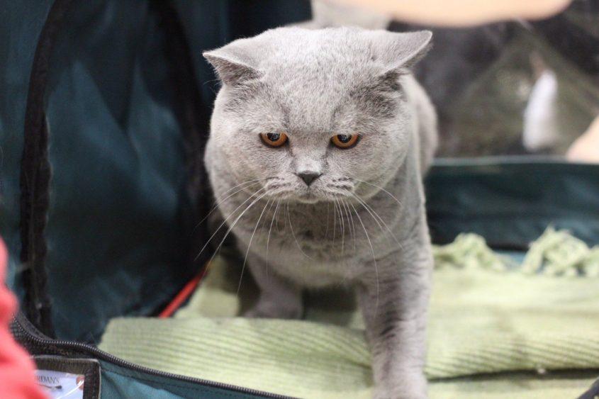 תערוכת חתולים. צילום: גרי בובקוב