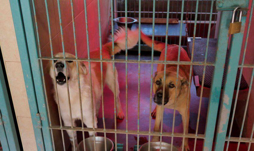 כלבים בכלוב בכלבייה. צילום: פבל