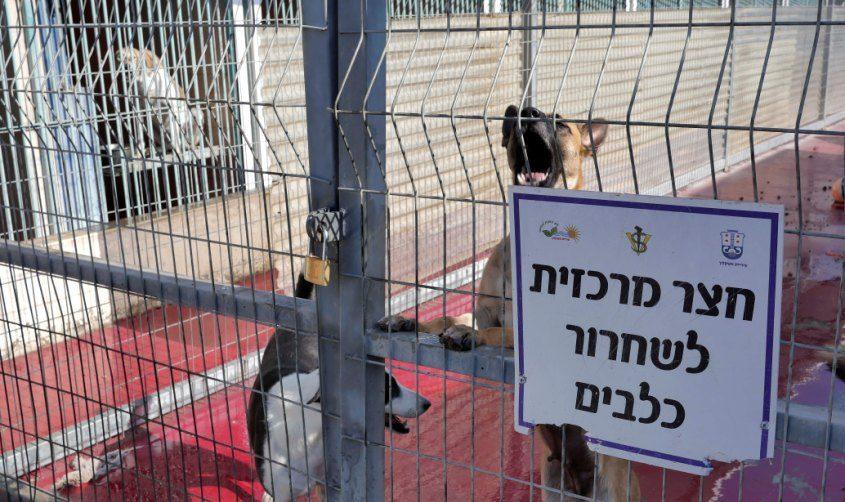 חצר הכלבייה. צילום: פבל