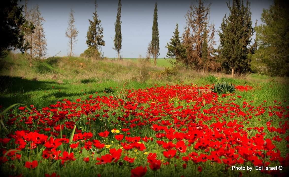 דרום אדום. צילום: אדי ישראל