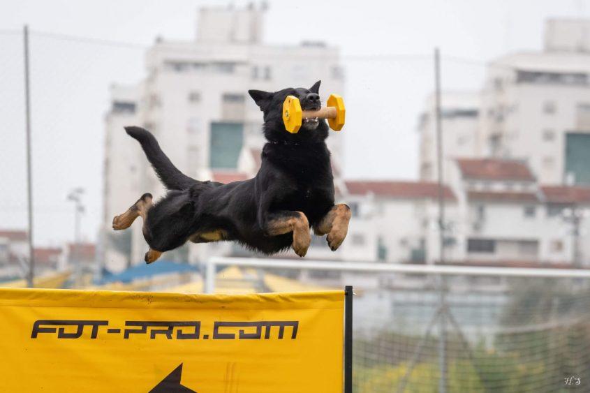 אליפות ישראל לכלבנות IGP 2019. צילום: חנה שלג
