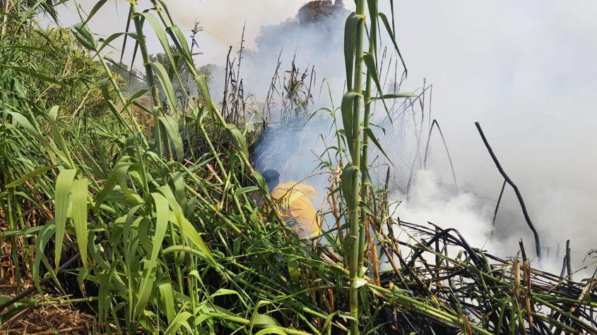 """לוחמי האש במאמצים לכבות את השריפה סמוך לכרמיה. צילום: אלי כהן, דובר כב""""ה דרום"""