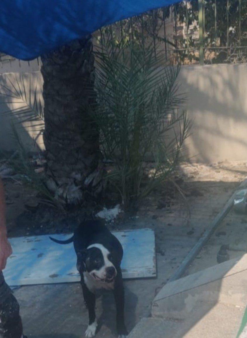 כל כלב ביג'י יומו, לא רק לרעה. צילום: דוברות עיריית אשקלון