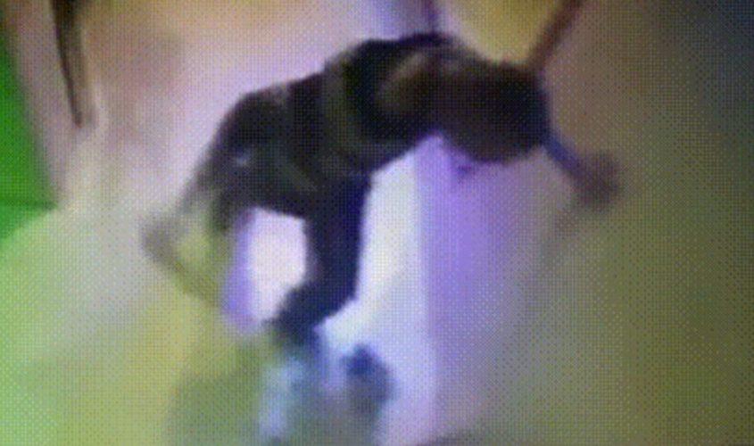 האיש מכה את כלבו. מתוך מצלמות האבטחה
