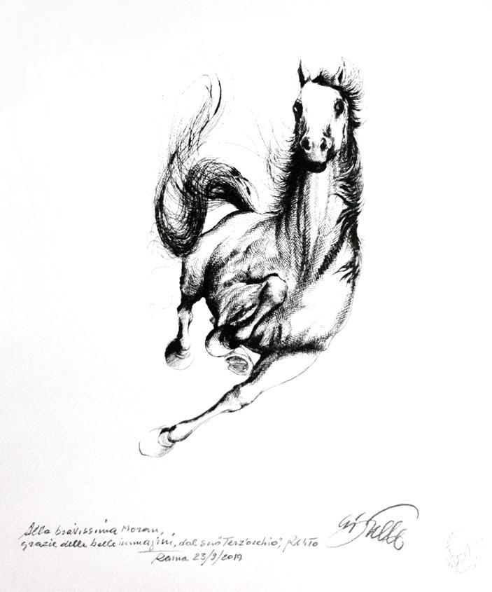 סוס מרוברטו הצייר עם הקדשה אישית