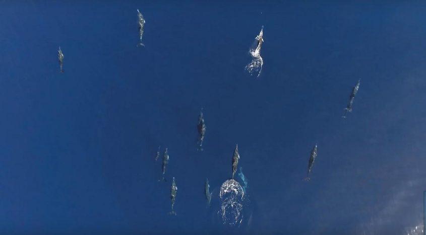 """דולפינים מול חופי אשקלון. צילום: גיא לוויאן, רט""""ג"""