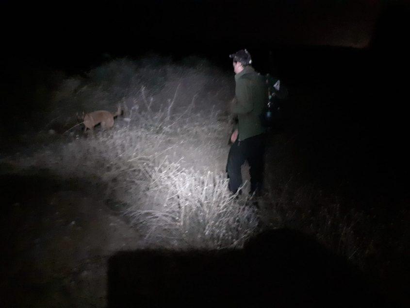 צוות הכלבנים מחפשים גם בלילה. צילום: דוברות המשטרה