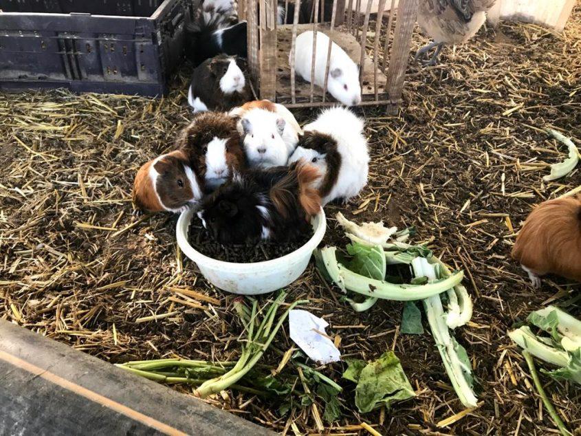 בעלי החיים בפינת החי בחווה החקלאית. צילום: דוברות עיריית אשקלון