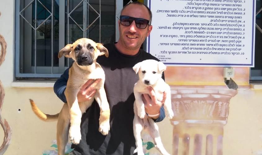 כלבים בכלבייה העירונית. צילום: דוברות עיריית אשקלון