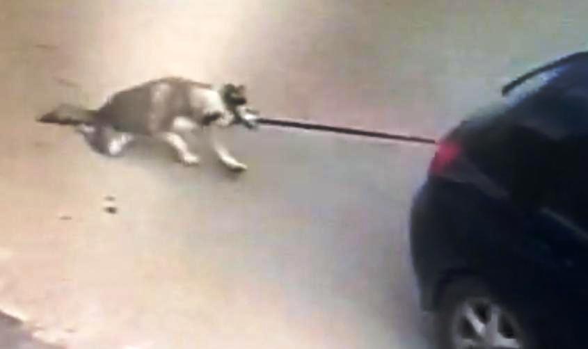 גרירת הכלב באוטו