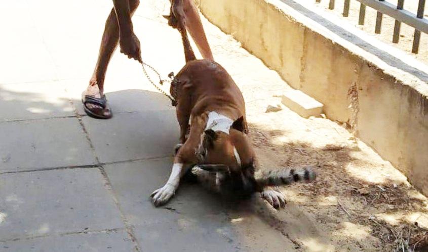 התיעוד הקשה של הכלב שתוקף את החתול המסכן. צילום: התושבת המתלוננת, באדיבות העירייה