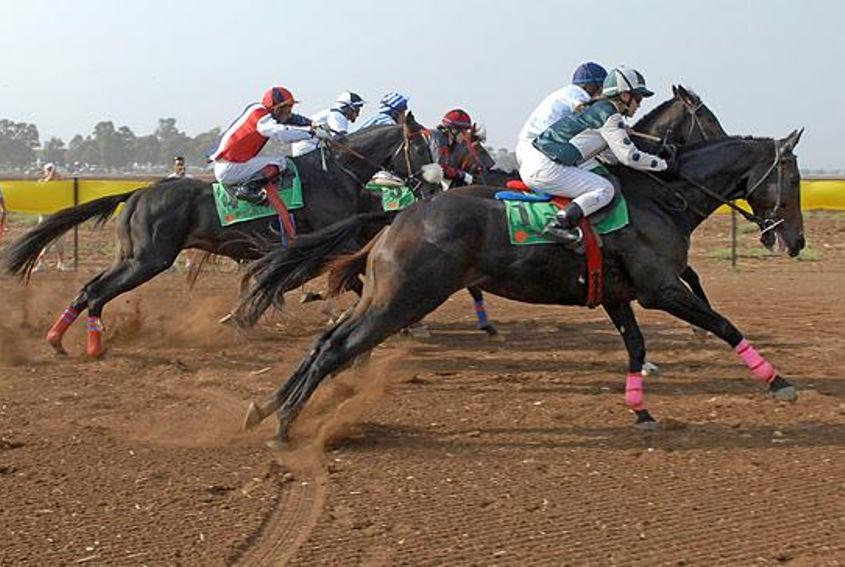 מרוץ סוסים. אילוסטרציה: ניר כפרי