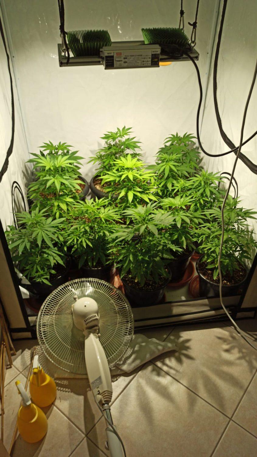 מעבדת הסמים באחת הדירות. צילום: דוברות המשטרה