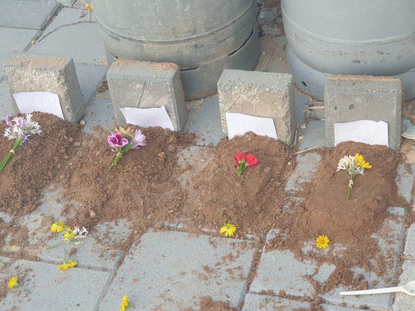 קבר אחרים. החתולים שמתו קבורים זה לצד זה. צילום: ימית מרדכי ויראג