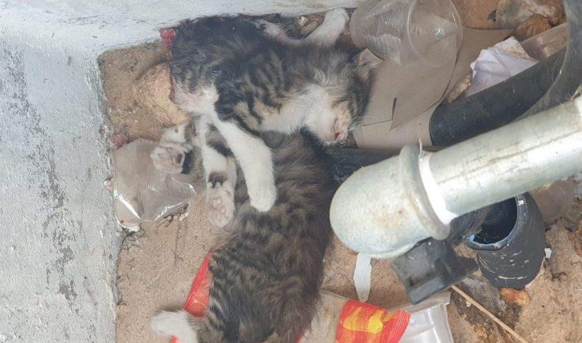 הפילר שבו נמצאו גופות החתולים המתים. צילום: ימית מרדכי ויראג