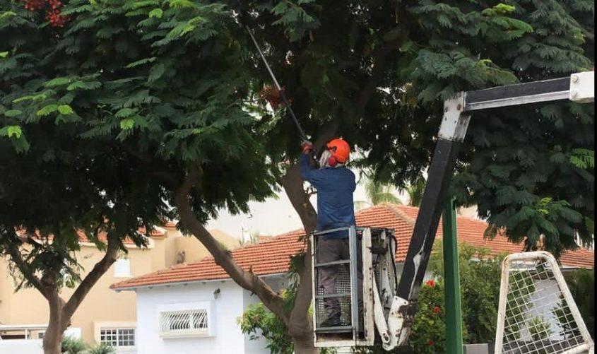 גוזמים עצים. צילום: דוברות עיריית אשקלון