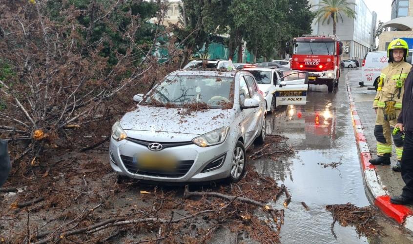 """העץ שקרס ברחוב הגבורה. צילום: אחמד אבו מוך, תיעוד מבצעי מד""""א"""