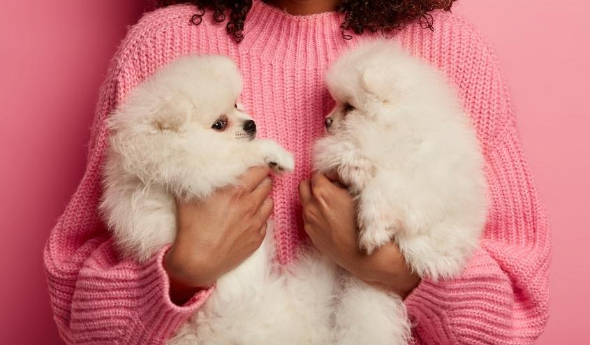 כלבים. צילום: freepik.com