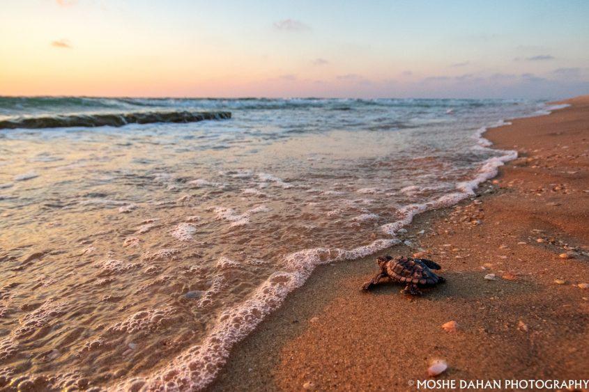 אבקוע בדרך לים. צילום: משה דהן