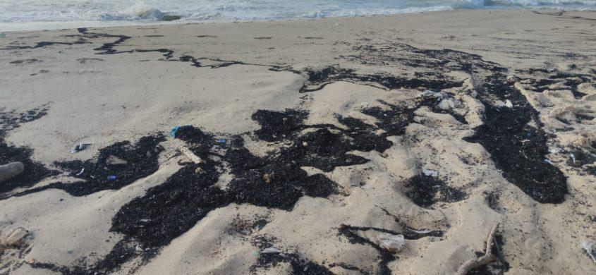 פתיתים שחורים בחוף. צילום: עמותת צלול